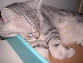 2003:可愛的睡相