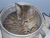很瘦小的可愛小母貓:1864089720.jpg