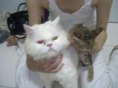 很瘦小的可愛小母貓:1864089700.jpg
