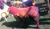 西澳。Northampton:11 澳洲風情羊,牠的色澤超美的,是我很喜歡的剪影畫風.jpg