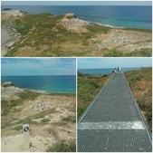 西澳。Rockingham。Penguin Island:鳥數眾多!從步道上滿滿的鳥屎狀就可得知!.jpg