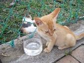 Malaysia, Melaka:11墓園附近可愛的小貓.jpg