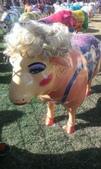 西澳。Northampton:13 性感美艷羊,穿細肩、戴長睫毛和耳環、假髮,是全場最令人驚豔的一隻羊咩咩.jpg