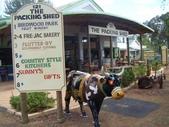 西澳。Balingup:10 街景一:光看這頭牛就知道耗費不少功夫.jpg
