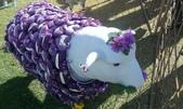 西澳。Northampton:3 胸罩羊,因為用的是胸罩內的襯墊縫成的愛心。在澳洲有所謂的Purple Bra Day是為了乳癌患者而舉辦的捐款活動日.jpg