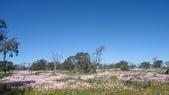 2018 西澳野花季:4 相片真的照不出親眼見的花海美景.JPG