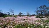 2018 西澳野花季:0 Yuna鄉間遍布的美麗花地毯.JPG