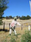 西澳。Balingup:1 所有稻草人裡面,就這隻最悠閒,最不像稻草人。姿勢一百分.jpg