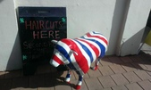 西澳。Northampton:0 在Northampton理髮店前遇到的英國羊.jpg