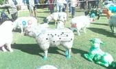 西澳。Northampton:6 文字遊戲羊,文字遊戲內有寫著Northampton和Ewe之類的相關文字,可惜陽光太大沒拍好.jpg