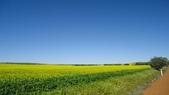 2018 西澳野花季:6 藍天、綠地、油田、紅土…澳洲鄉村之美.JPG