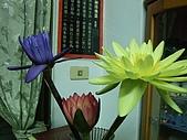 花開富貴:DSCF6006.jpg
