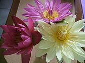 花開富貴:DSCF5963.jpg
