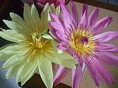 花開富貴:DSCF5962.jpg