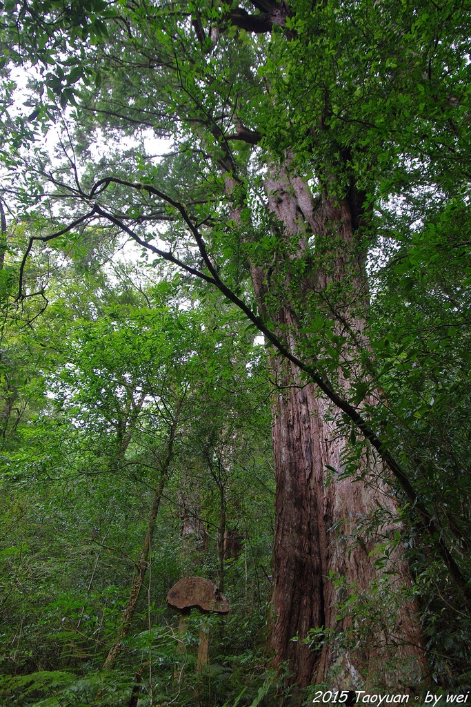 2015 盛夏。再訪拉拉山:IMGP0343.JPG