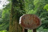 2015 盛夏。再訪拉拉山:IMGP0351.JPG