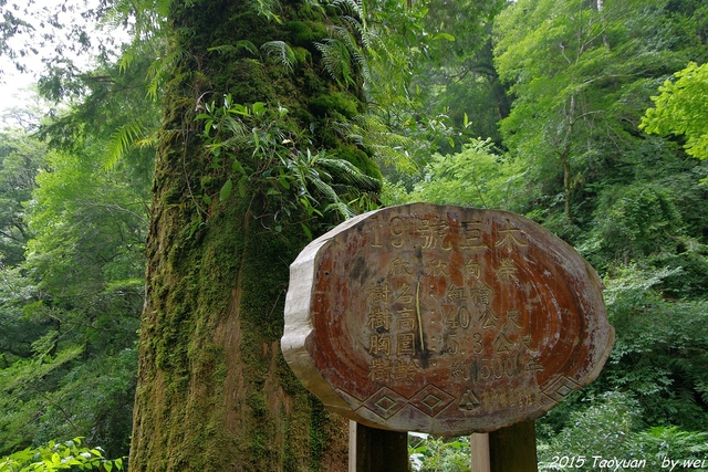 IMGP0351.JPG - 2015 盛夏。再訪拉拉山