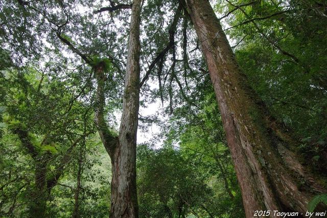 IMGP0304.JPG - 2015 盛夏。再訪拉拉山