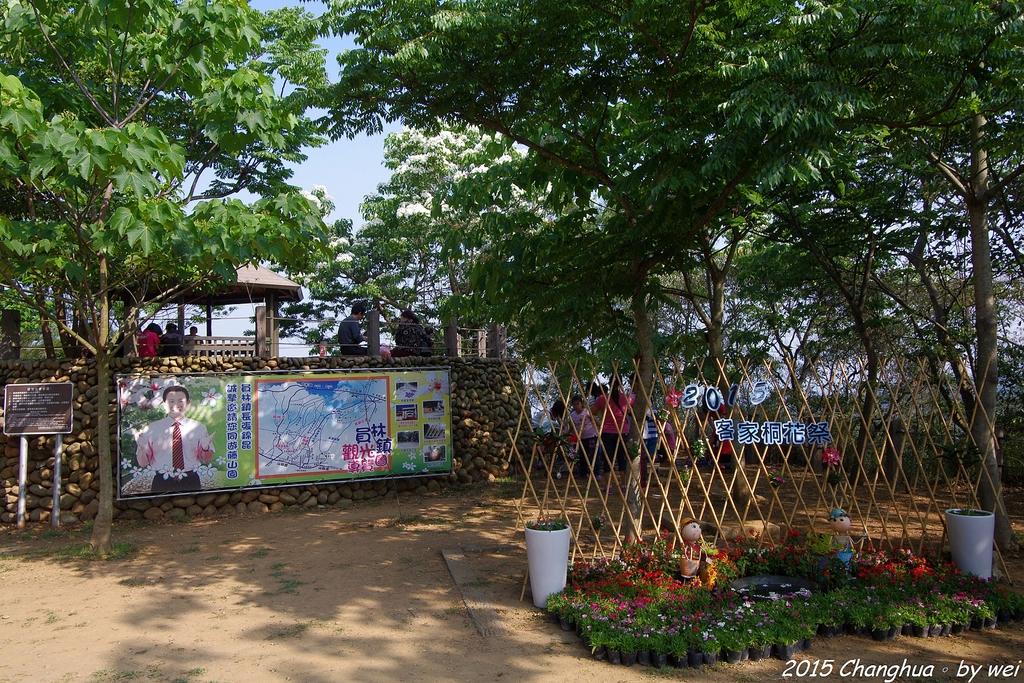 彰化員林。藤山步道油桐花:IMGP8966.JPG