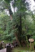 2015 盛夏。再訪拉拉山:IMGP0446.JPG
