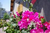 台中。漫步范特喜中興一巷 - 綠光計劃打造老房新生命:IMGP8305.JPG