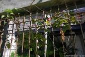 台中。漫步范特喜中興一巷 - 綠光計劃打造老房新生命:IMGP8271.JPG