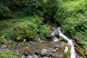 2015 盛夏。再訪拉拉山:IMGP0361.JPG