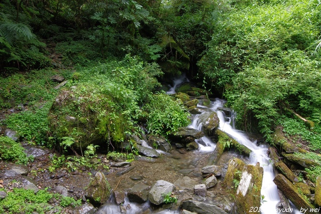 IMGP0361.JPG - 2015 盛夏。再訪拉拉山