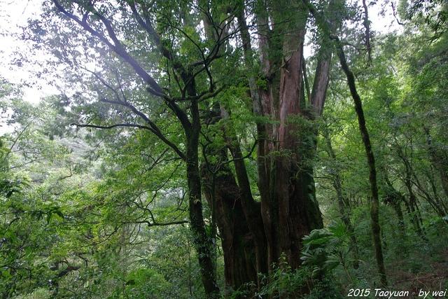 IMGP0439.JPG - 2015 盛夏。再訪拉拉山