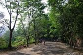 彰化員林。藤山步道油桐花:IMGP8956.JPG