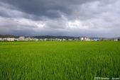 南投中興新村。紫色的浪漫 - 藍花楹:IMGP8433.JPG