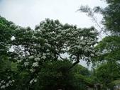 1070428 桃園楊梅保甲古道、東森山林步道:DSC08405C.jpg