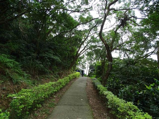 DSC05330C.jpg - 1051119 桃園蘆竹五酒桶山步道