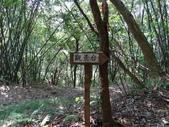 1040919 桃園龜山大坑桐花步道、陳厝坑山:DSC03547C.jpg
