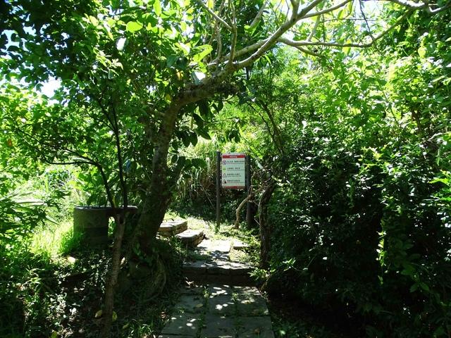 DSC04525C.jpg - 1060630 花蓮豐濱芭崎眺望台,大石鼻山步道
