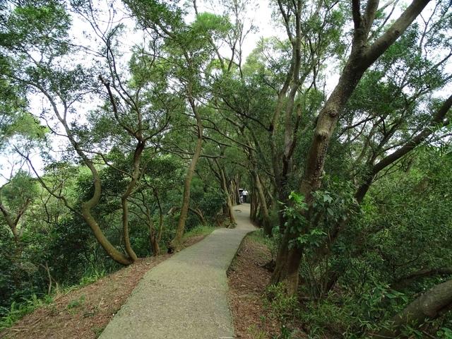 DSC05338C.jpg - 1051119 桃園蘆竹五酒桶山步道