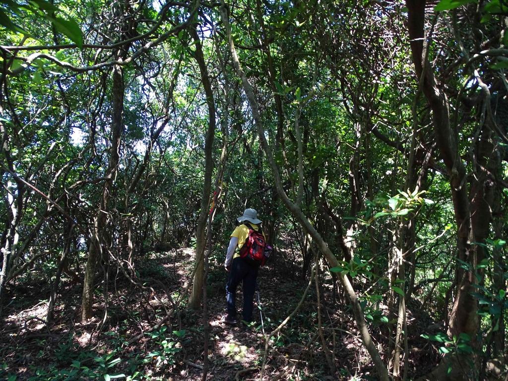 1050924 新北萬里野柳里登山步道、駱駝峰稜線步道:DSC08539C.jpg