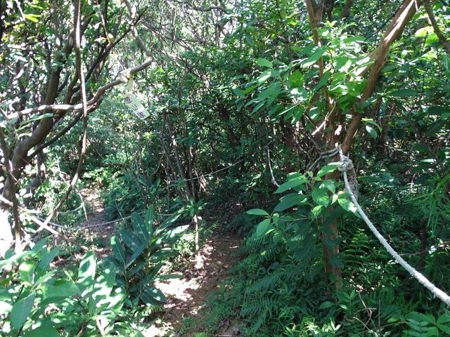 DSC08588C.jpg - 1050924 新北萬里野柳里登山步道、駱駝峰稜線步道