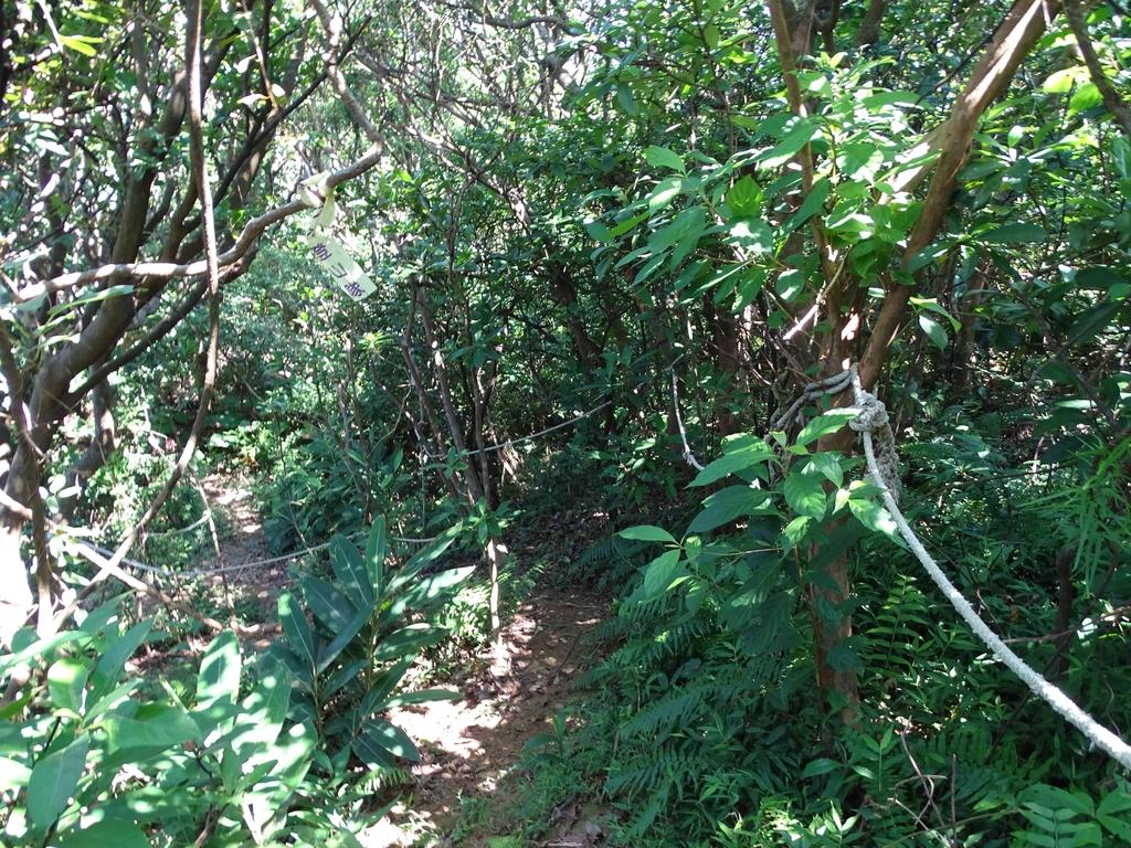1050924 新北萬里野柳里登山步道、駱駝峰稜線步道:DSC08588C.jpg