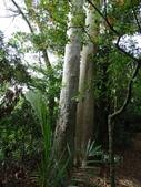 1040926 新竹新埔文山步道、犁頭山:DSC03801C.jpg