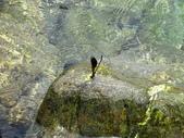 1060817 宜蘭南澳東岳湧泉、蛇山步道、蘇澳粉鳥林漁港:DSC07650.JPG