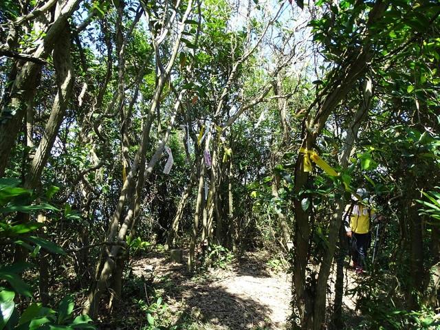 DSC08600C.jpg - 1050924 新北萬里野柳里登山步道、駱駝峰稜線步道