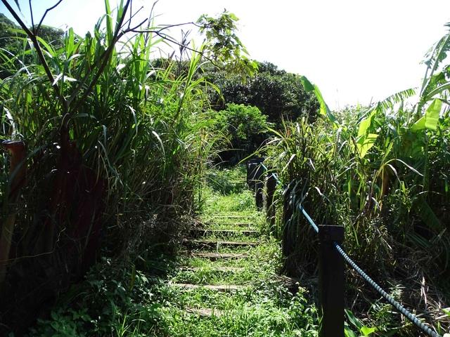 DSC08492C.jpg - 1050924 新北萬里野柳里登山步道、駱駝峰稜線步道