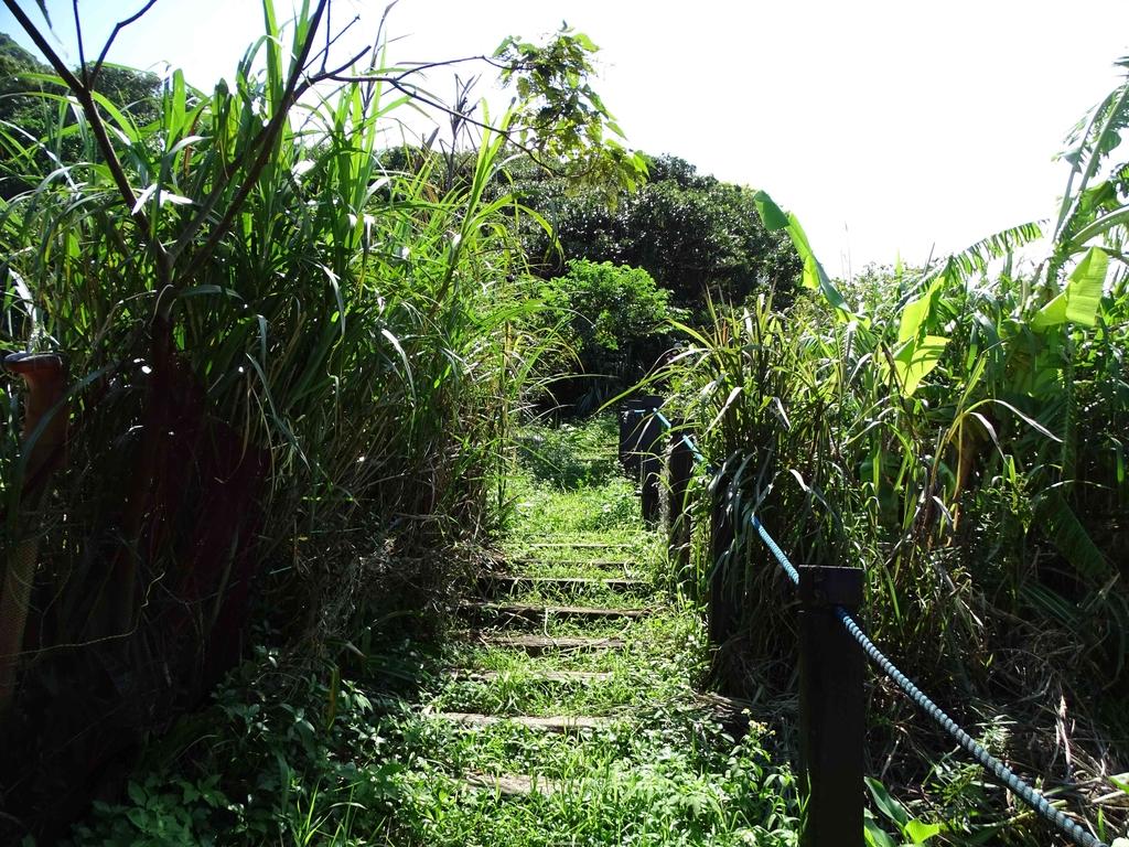 1050924 新北萬里野柳里登山步道、駱駝峰稜線步道:DSC08492C.jpg