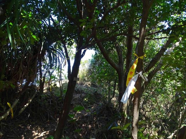 DSC08631C.jpg - 1050924 新北萬里野柳里登山步道、駱駝峰稜線步道