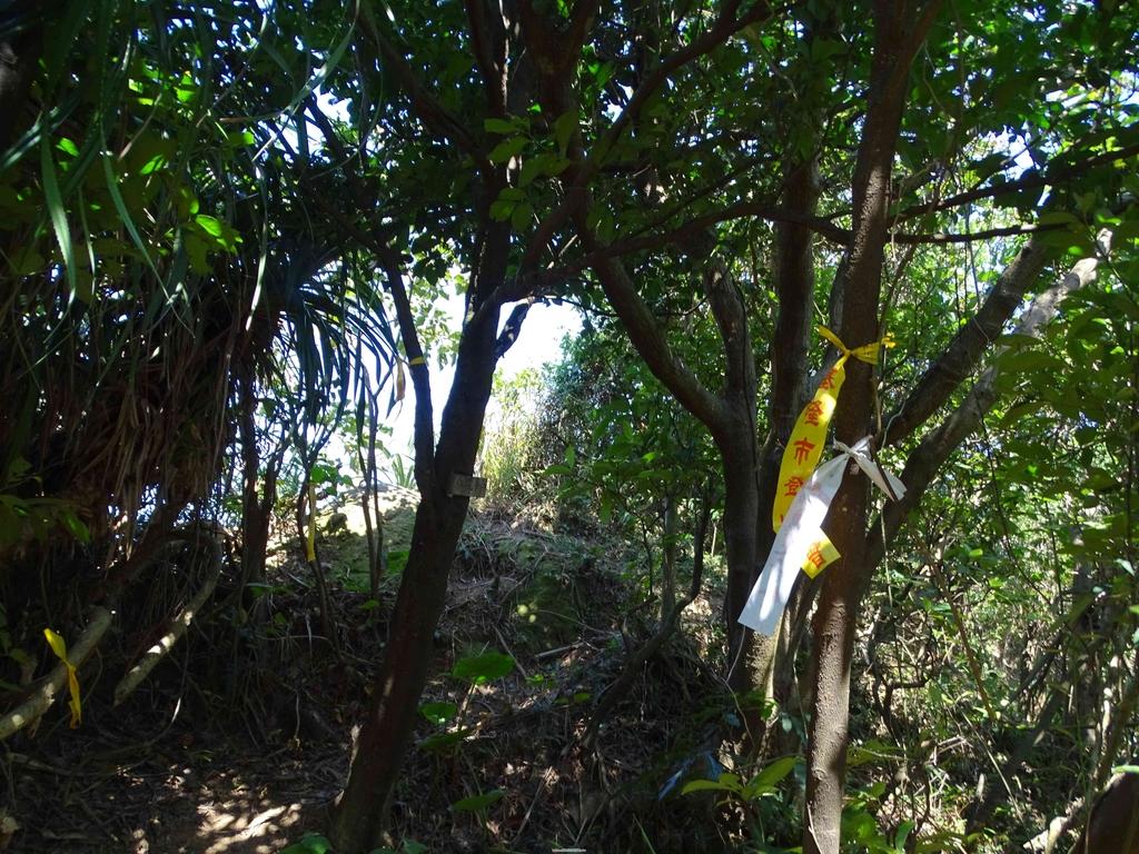 1050924 新北萬里野柳里登山步道、駱駝峰稜線步道:DSC08631C.jpg