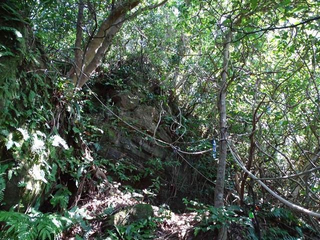 DSC08533C.jpg - 1050924 新北萬里野柳里登山步道、駱駝峰稜線步道