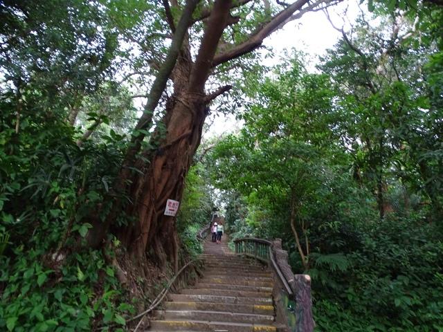 DSC00231C.jpg - 1070103 台北劍潭山步道