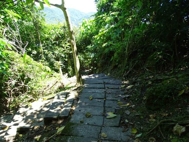 DSC04541C.jpg - 1060630 花蓮豐濱芭崎眺望台,大石鼻山步道