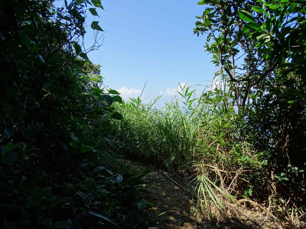 1050924 新北萬里野柳里登山步道、駱駝峰稜線步道:DSC08589C.jpg